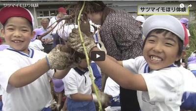 【奈良テレビ】サツマイモほり体験(期間限定放送)