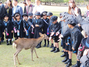 P1生が奈良市内へ宿泊学習に行ってきました