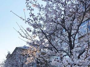 奈良学園小学校入学式